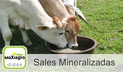 Maxiagro, Sales Mineralizadas La Dorada