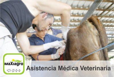 Maxiagro, Asistencia Veterinaria La Dorada